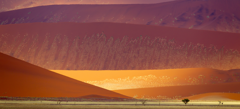 Dunes dans le Parc national Namib-Naukluft, Namibie