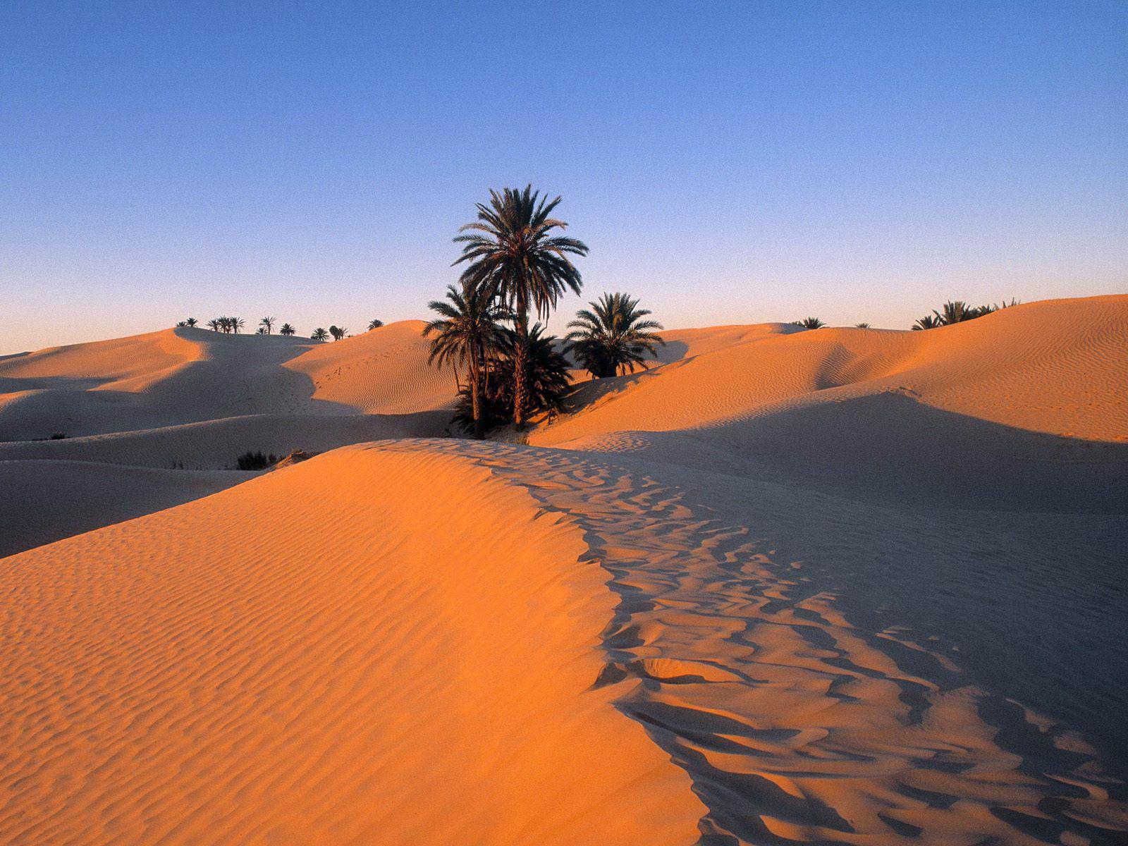 Sahara occidental - dunes