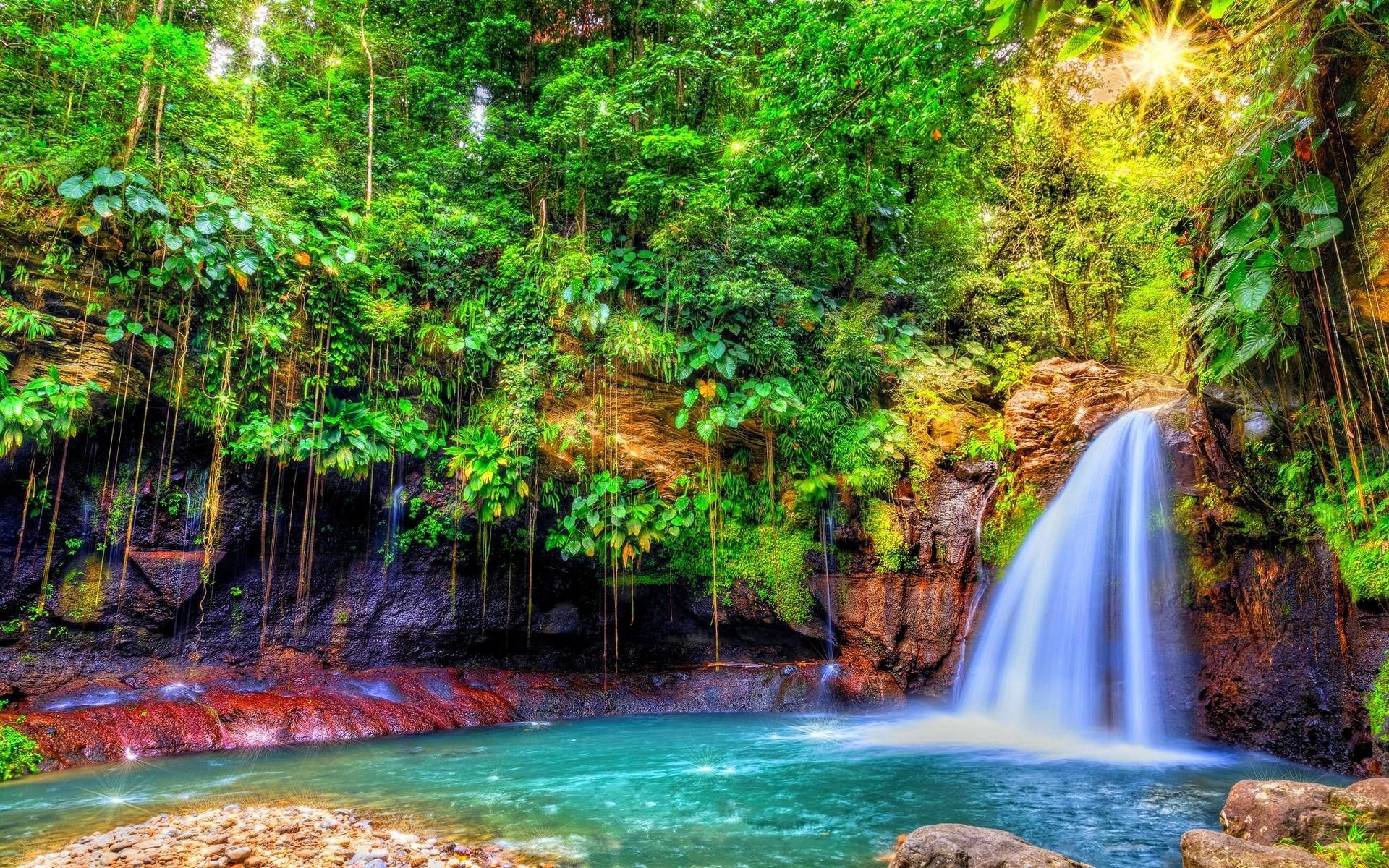 Cascade dans la jungle, Guadeloupe