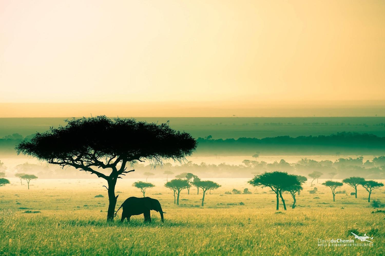 Savane au Kenya