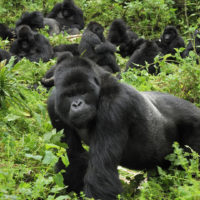 Rwanda : menaces sur l'environnement à cause de l'urbanisation