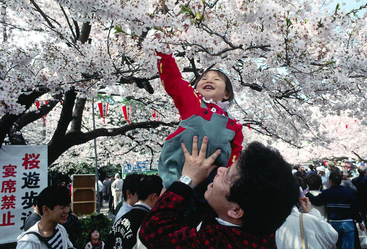 Enfant lors de la fête des fleurs (Hanami) au Japon