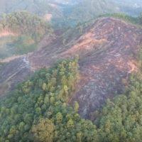 Forêts dans le monde en 2016