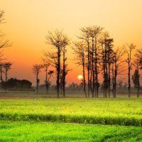 Pakistan : 200 millions d'habitants