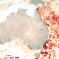 Australie : la Grande barrière de corail est en danger
