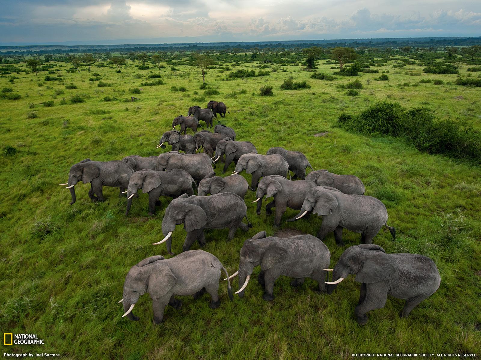 Éléphants en Ouganda