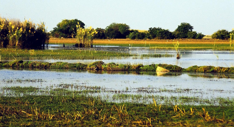 Zambie - Lac Bangwelo