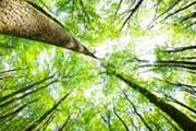 Sept milliards d'arbres plantés