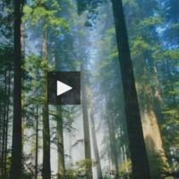 Vidéo : émissions de CO2